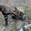 Direcţia Silvică Harghita a întocmit 9 documentaţii pentru ca proprietarii de pădure privaţi să poată beneficia de plăţi pentru angajamente de silvo-mediu