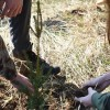 Campania de împăduriri de primăvară, la final