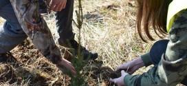 <h5><i>Luna plantării arborilor 2020:</i></h5>Direcţia Silvică Harghita va planta peste 720.000 de puieţi pe 177 de hectare