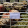 Târgul de produse tradiționale și Expoziția de animale care trebuia să aibă loc în Corbu au fost anulate