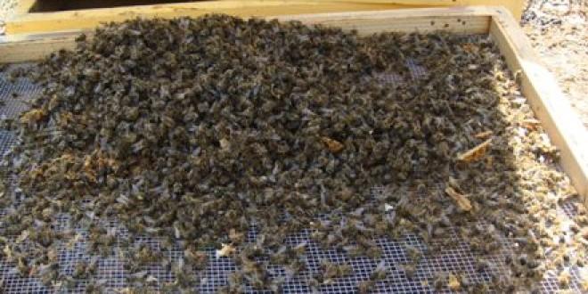 Cea mai slabă producţie de miere din 1946 încoace; dezastru la stupăritul staţionar