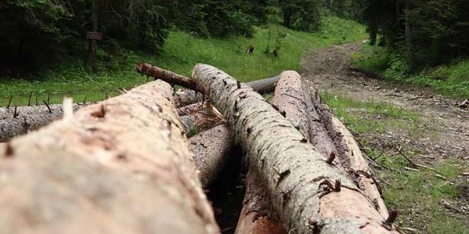 <h5><i>Din analiza Direcţiei Silvice Harghita pe semestrul I:</i></h5>Materialul lemnos tăiat ilegal a scăzut cu aproape 100 mc faţă de aceeaşi perioadă a anului trecut
