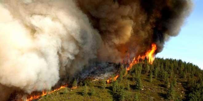 Apel pentru prevenirea incendiilor de pădure