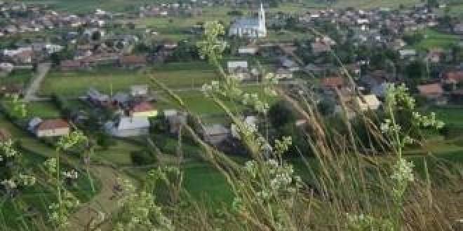 De vorbă cu primarul Ion Rizea despre comuna Subcetate (IV):Suprafaţa cultivată cu cartofi a scăzut, lăsând locul porumbului furajer, cultivat de cei care au ferme de animale în comună