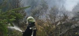 Incendiul de vegetație uscată și resturi de exploatație forestieră lângă Gheorgheni a fost lichidat