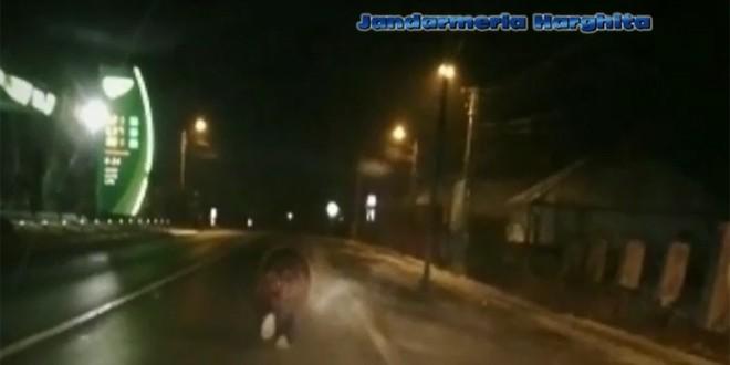 Ursul a ajuns și în Gheorgheni