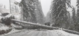 Șoferul unui autocamion, transportat la spital după ce un copac a căzut peste autovehicul