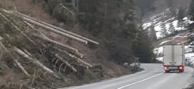 <h6><i>Pentru evitarea accidentelor şi a penelor de curent</i></h6>Apel al primarului comunei Corbu pentru tăierea copacilor din zona de protecţie de lângă drumul naţional
