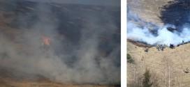 Ieri după amiază: Cinci incendii de vegetație uscată