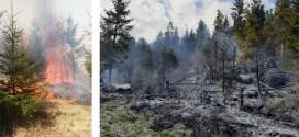 <h5><i>Incendiile de vegetaţie uscată, un pericol</i></h5>În decurs de două zile: incendii de vegetație și pădure în zonele Toplița, Gheorgheni și Racu, care au cuprins peste 10 hectare de pădure
