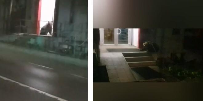 <h5>În decurs de o singură noapte</h5>Jandarmii au intervenit de patru ori pentru alungarea unor urși din Băile Tușnad (Text și video)