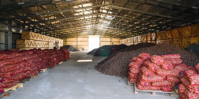 Preţul cartofului, de trei ori şi jumătate mai mic decât în anii trecuţi