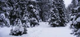 <h5><i>Reprezentant WWF:</i></h5> România îşi vinde pădurile pe un volum estimat grosier, înainte ca arborii să fie doborâţi