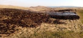 Comisarii de mediu harghiteni atrag atenţia că incendierea terenurilor agricole sau pajiştilor este ilegală