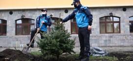 Jandarmeria Harghita a plantat, simbolic, 3 brazi argintii în fața noului sediu