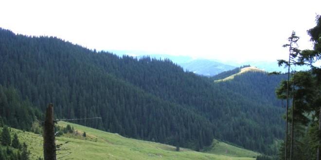 Se pregătesc noi măsuri pentru limitarea tăierilor ilegale de arbori