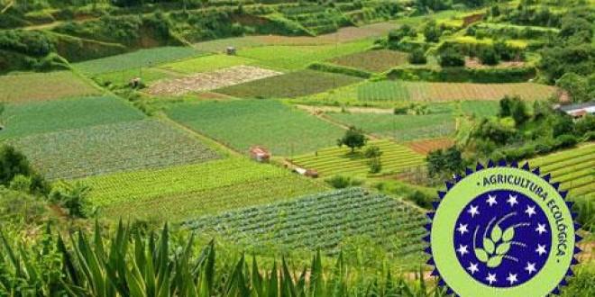 Harghita: În sistemul agriculturii ecologice sunt înregistraţi 250 de producători