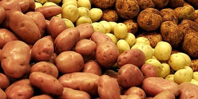 Producătorii harghiteni rămân cu cartofii în depozite, iar străinii ni-i vând pe ai lor ieftin şi cu boli la pachet!