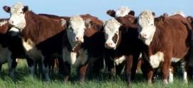 Ce efective de animale şi care sunt producţiile realizate în sectorul zootehnic în judeţul Harghita