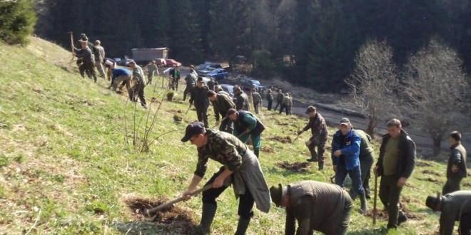 """""""Luna pădurii"""": Direcţia Silvică Harghita va planta 1.570.000 de puieţi"""