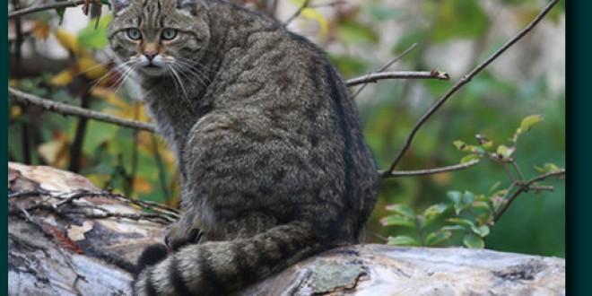 Habitatele pentru speciile protejate din pădurile harghitene nu s-au deteriorat