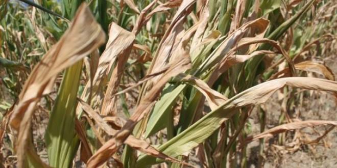 Pentru pagubele provocate de secetă: Pe lista judeţelor afectate va figura şi Harghita