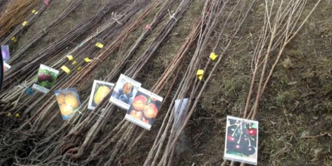 Puieţii de pomi fructiferi – produşi şi certificaţi în judeţul nostru – vor prinde cu siguranţă rădăcini…