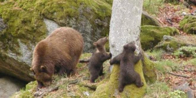 Campanie locală pentru o mai eficientă gestionare a conflictelor om-urs