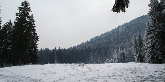 Anul trecut au fost tăiaţi ilegal mai puţin de 1.000 metri cubi material lemnos de pe suprafeţele administrate de Direcţia Silvică