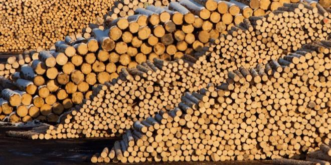 Lemnul tăiat ilegal din pădurile României de compania austriacă Schweighofer nu va mai fi certificat ca fiind sustenabil