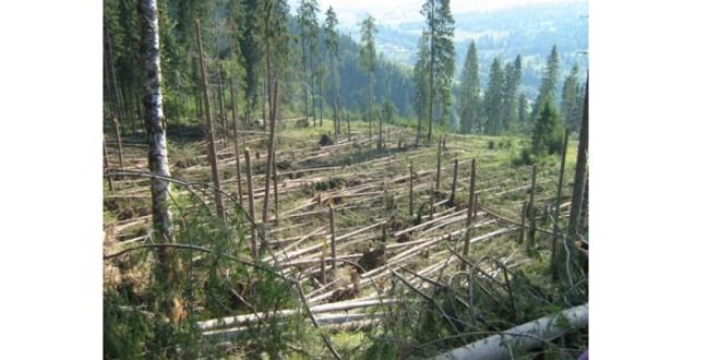 Punerea în valoare a masei lemnoase rezultată în urma doborâturilor de vânt  se apropie de sfârşit la DS Harghita şi urmează licitaţiile publice