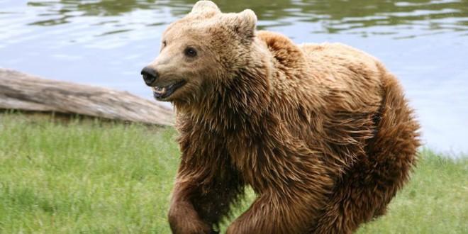Miercurea-Ciuc: workshop pe tema urşilor