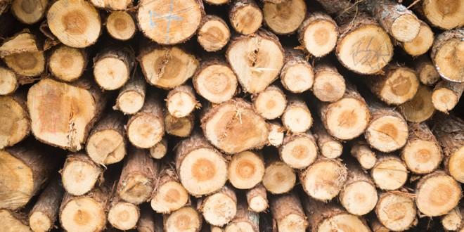 Despre problema aprovizionării populaţiei cu lemn de foc pentru iarnă
