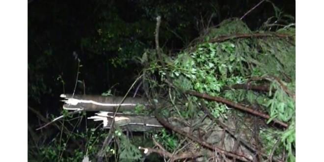 Efectele furtunii de duminică seara: un bărbat decedat, 28 de localităţi nealimentate total cu energie şi parţial oraşul Borsec, circulaţie îngreunată pe mai multe drumuri
