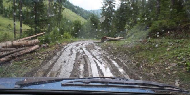 Materialul lemnos tăiat ilegal, în uşoară scădere faţă de aceeaşi perioadă a anului trecut