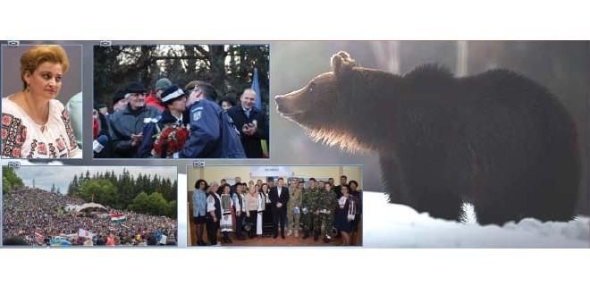 RETROSPECTIVĂ Harghita: 2018 – Noi atacuri ale urşilor şi o lege pentru despăgubirea victimelor acestora