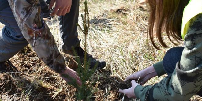 Sprijin financiar pentru împădurire