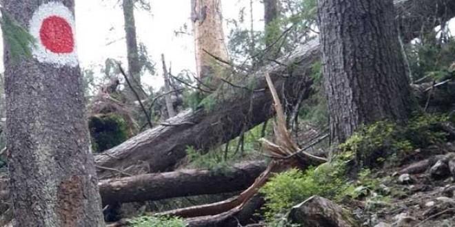 Salvamontiştii au deblocat sute de kilometri de trasee montane, îndepărtând arborii căzuţi în timpul iernii