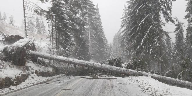 <h6><i>Efecte înregistrate la nivelul judeţului Harghita, în urma codului portocaliu de vânt puternic şi viscol:</i></h6> Drumuri închise, copaci căzuţi pe autoturisme, localităţi fără curent electric, circulaţia feroviară temporar blocată