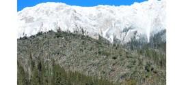 Peste 800.000 metri cubi de material lemnos doborât de vânt în Harghita, în urma furtunii din 5-6 februarie