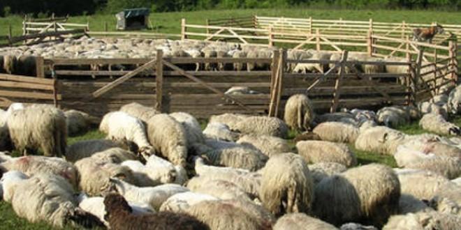 Peste 26.000 de fermieri sunt aşteptaţi să depună cereri la APIA