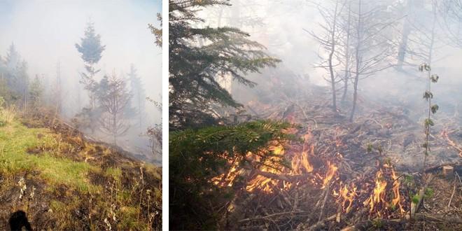 Pompierii din Gheorgheni acționează și acum să stingă un incendiu de vegetație care a izbucnit ieri după amiază