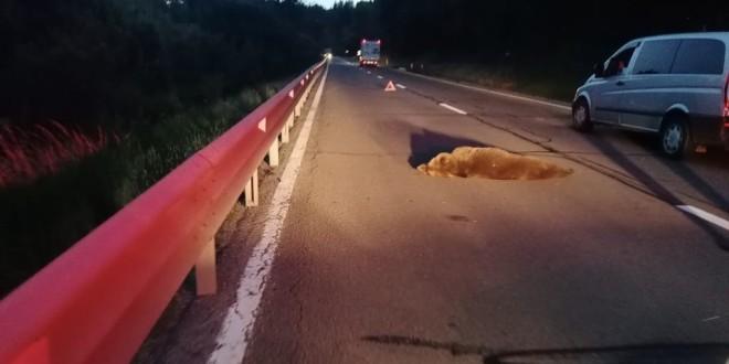 Un urs a fost lovit de un autovehicul pe DN 13A