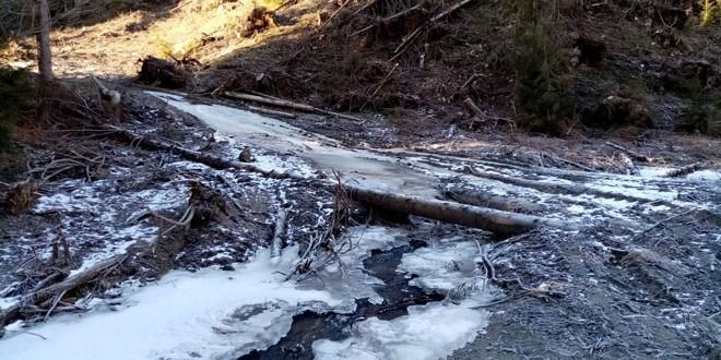 Doi operatori economici sancţionaţi pentru exploatarea de masă lemnoasă prin albia pârâului Belchia din zona Gheorgheni