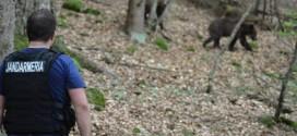 Urşi: 17 mesaje de avertizare RO-ALERT în şase zile