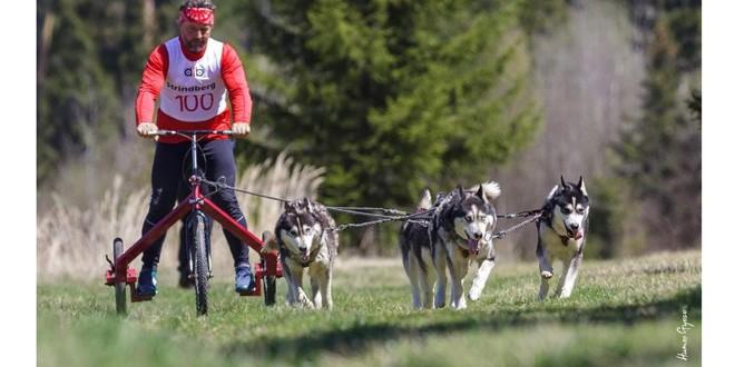 Prima ediţie topliţeană a concursului de atelaje canine