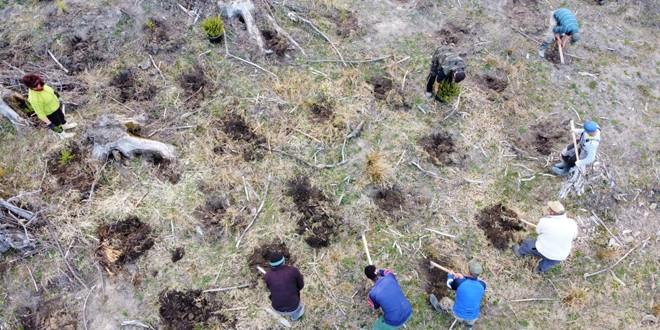 <h5><i>Campania de împăduriri, finalizată de DS Harghita:</i></h5> În total, o suprafaţă de 284 de hectare a fost plantată cu puieţi sau a fost regenerată natural