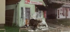 Aproximativ 2.200 de exemplare de urşi trăiesc în Harghita