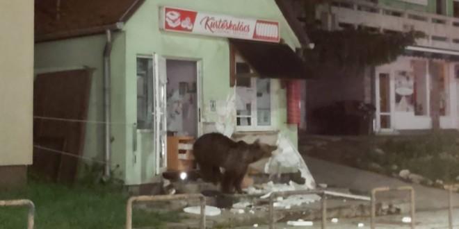 O pensiune și un magazin din Băile Tușnad au fost vizitate de urși – imagini video