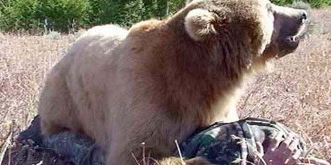 Încă un om atacat de urs în Harghita